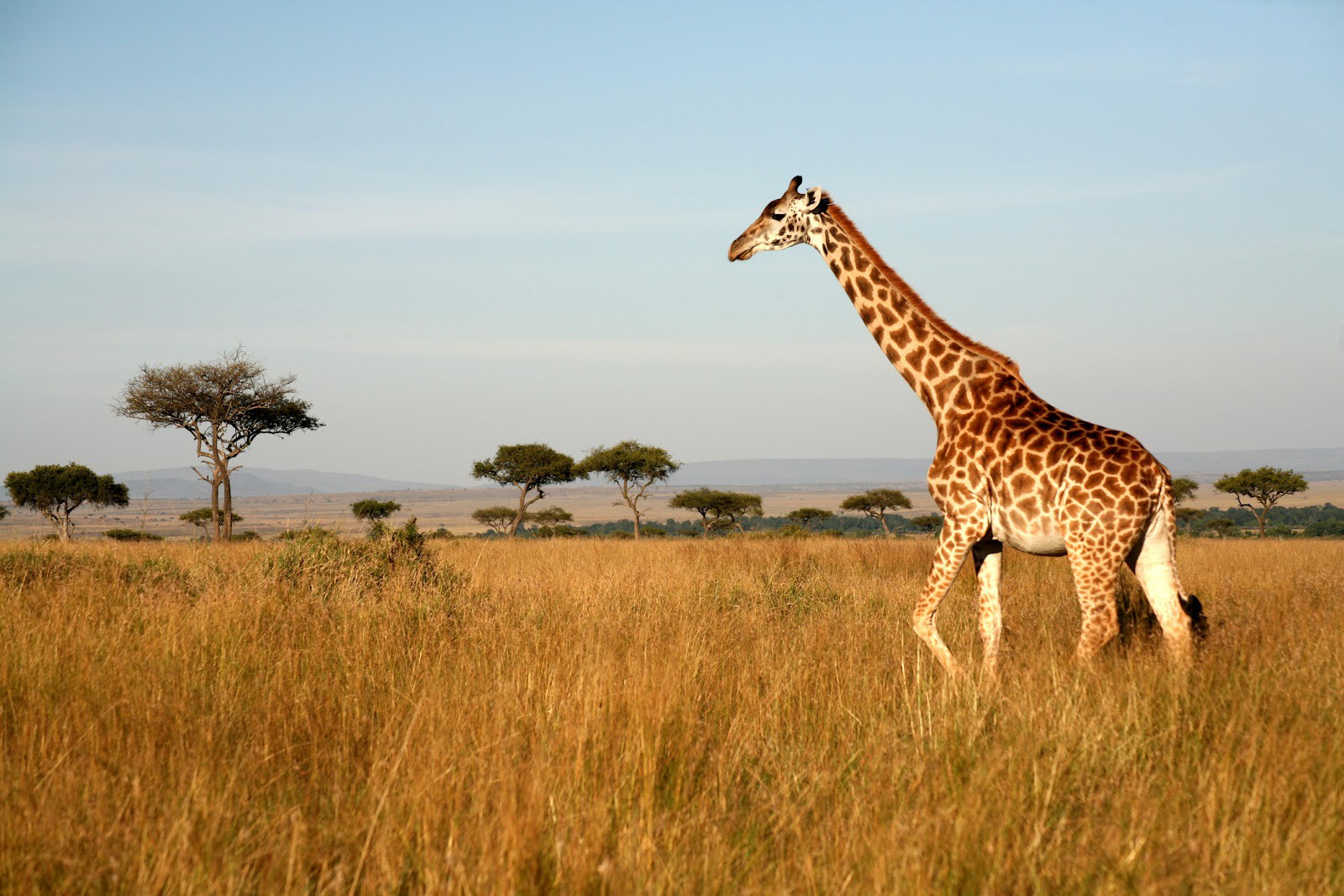 Must See Places in Nairobi