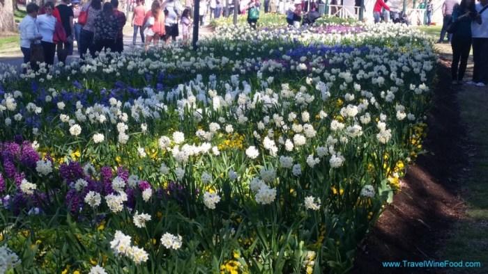 Floriade Canberra Flower beds
