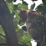 Bako National Park ~ Borneo