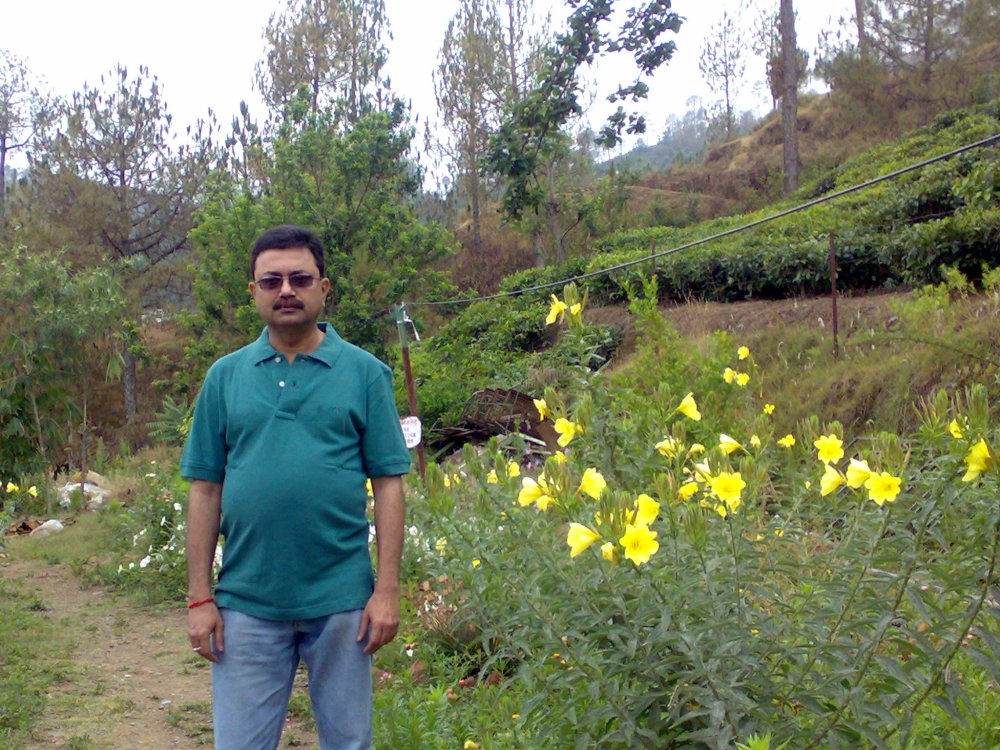 Kausani Tea Gardens, Kausani, Uttarakhand, India