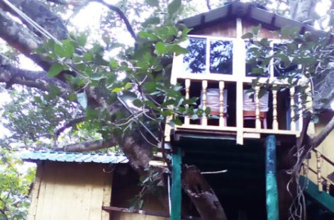 Giant Squirrel Nature Tree House