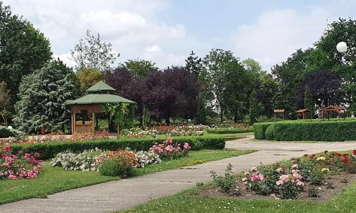 Rosarium cu peste 200 de specii de trandafiri din Grădina Botanică