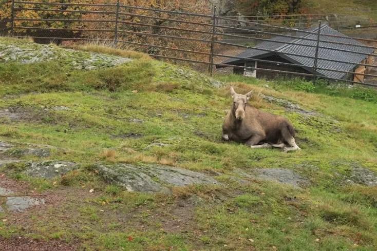 Elăniță în Slottsskogen