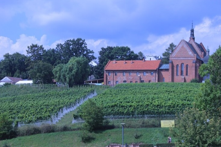 Sandomierz vineyard
