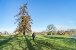 Long shadows in Verulamium Park