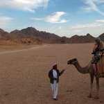 A camel ride into the Sinai Desert
