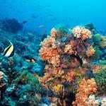 Snorkelling in the Red Sea – Tarin Island