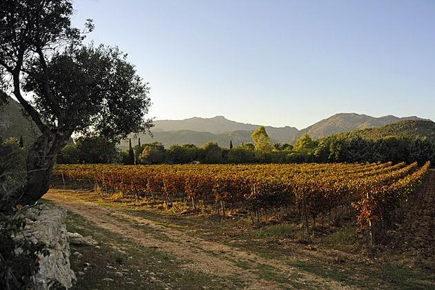 Mallorcan wine