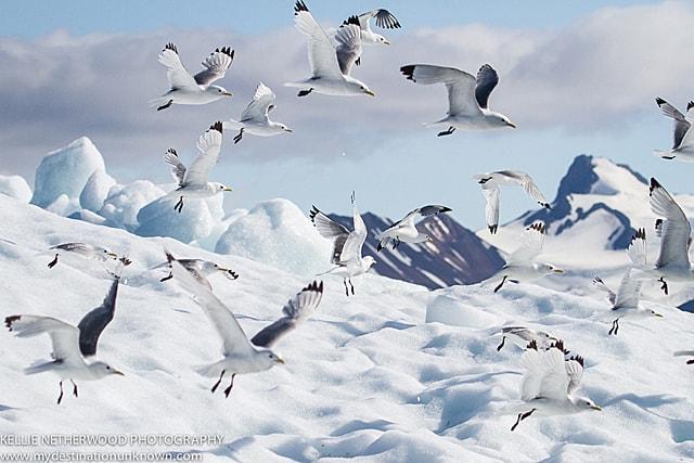 Arctic cruise norway