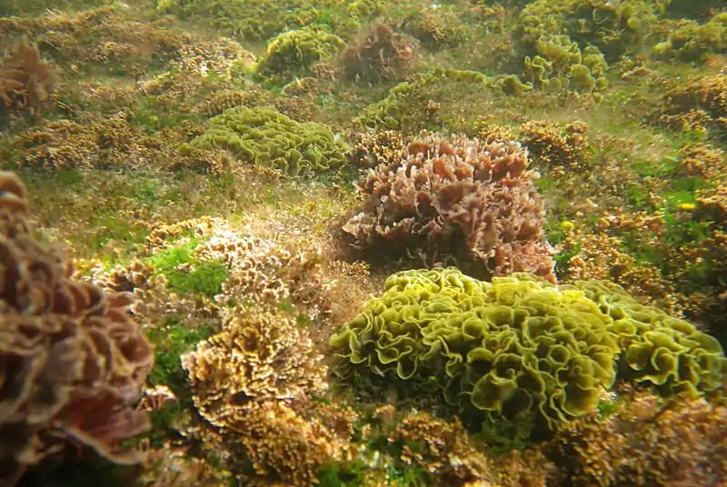 Algae covered coral reef