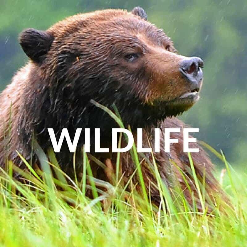 Wildlife travel blogS