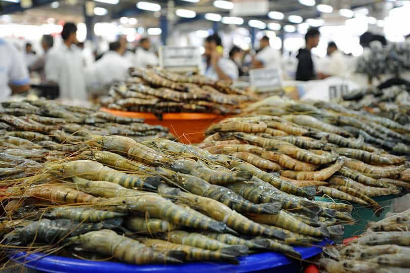 Dubai fish market, Dubai food tour