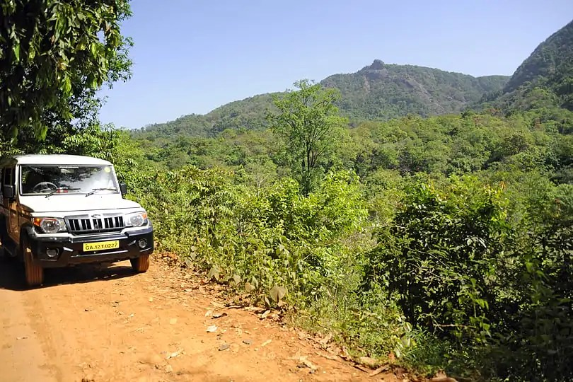 Driving through the Bhagwan Mahaveer Sanctuary and Mollem National Park