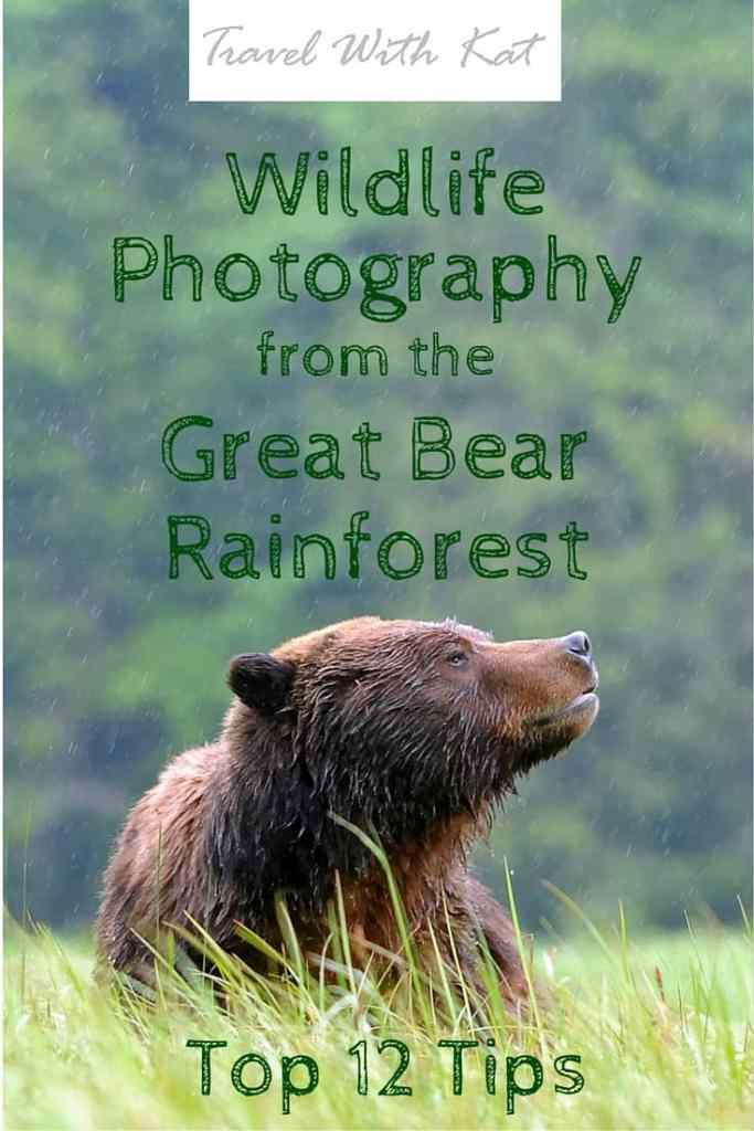 Top 12 Tips for photographing bears in the Great Bear Rainforest, Canada