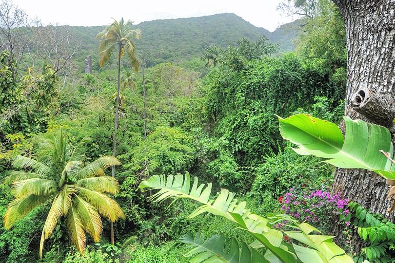 The rainforest of St Kitts