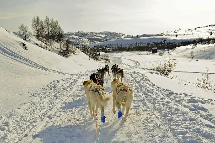 Riding with thte huskies across frozen fjords in Arctic Norway