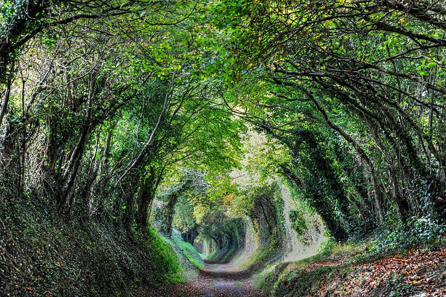 Tree tunnel - The path to Halnaker Windmill, West Sussex, England