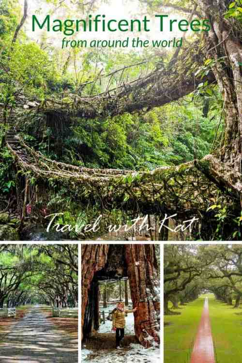 From a magical tree tunnel in the English countryside to a growing tree bridge in India, travel bloggers share some of their favourite tree photographs.