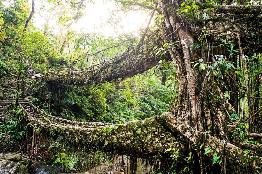 Living Root Bridge, Meghalaya, India
