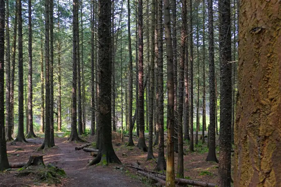 Tollymore Forest, Co. Down | North of the Wall | Game of Thrones filming location | Game of Thrones filming location