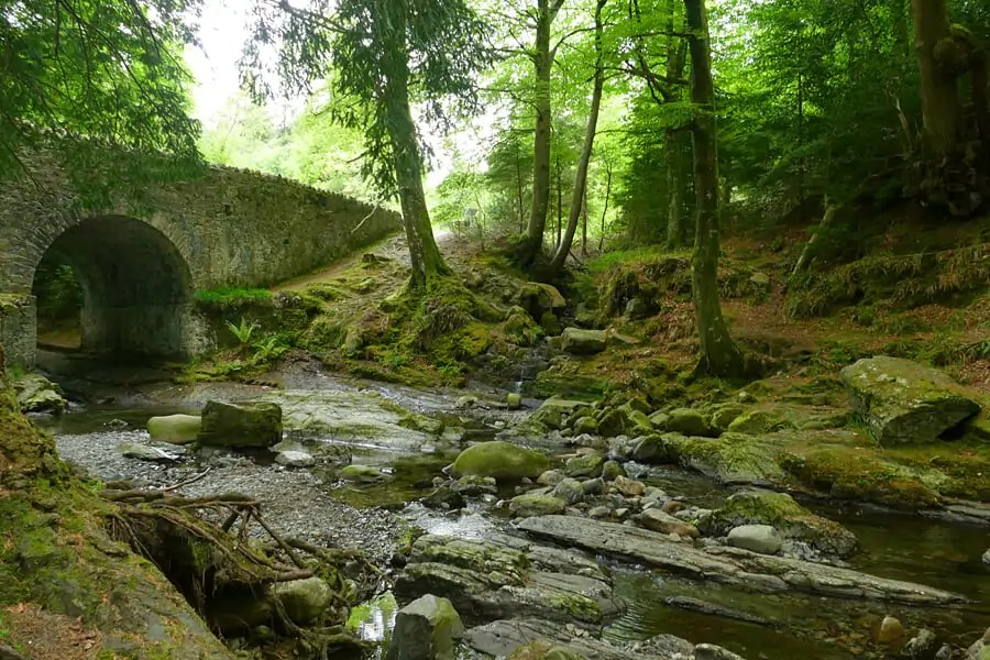Tollymore Forest, Co. Down | The land around Winterfell | Game of Thrones filming location