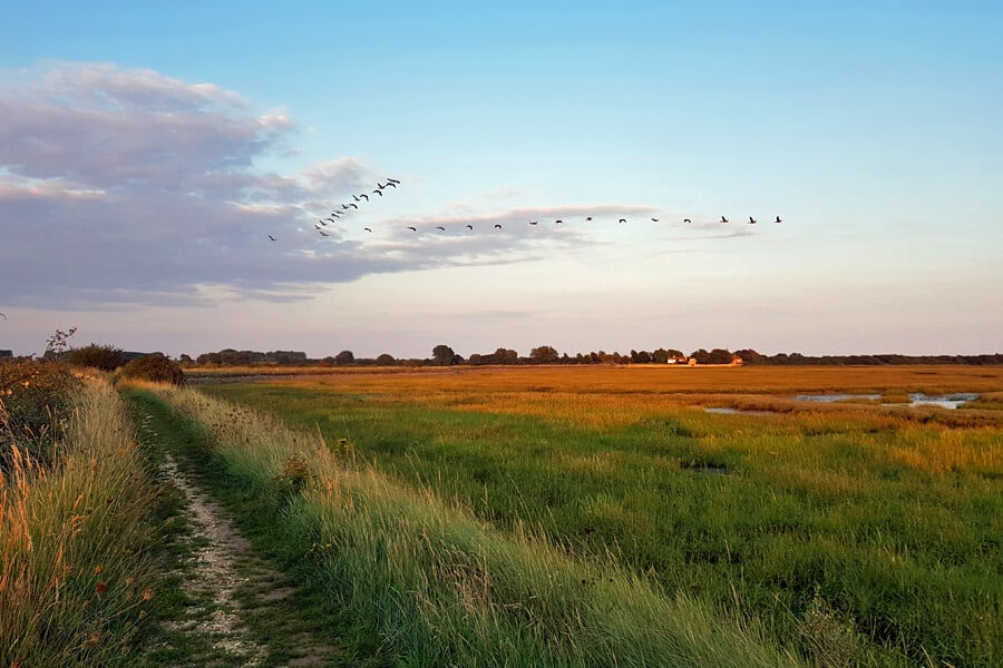 Autumn walks around Pagham Harbour Nature Reserve
