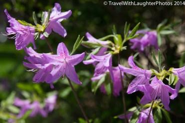 Doylestown Spring Flowers 2014-1202