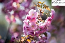 Doylestown Spring 2015-4709-27