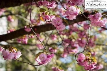 Doylestown Spring 2015-4745-36