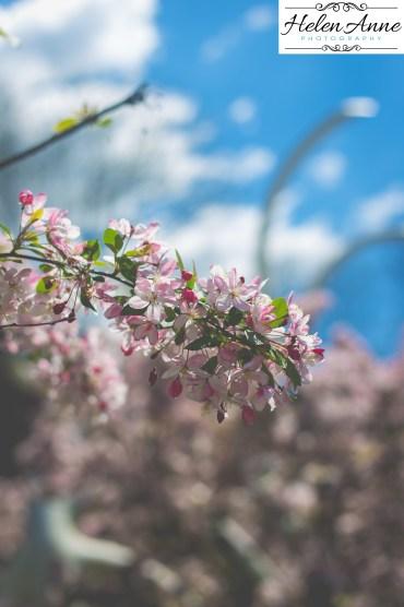Doylestown Spring 2015-4825-21