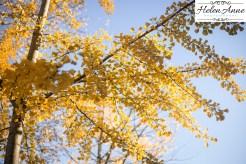 doylestown-november-2016-2188-5