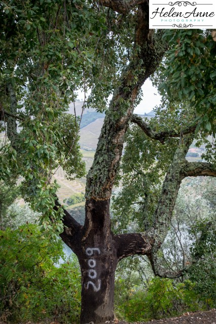 Dating the cork trees for when they were harvested.