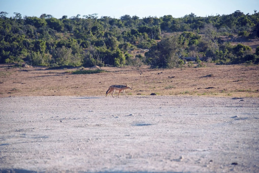 Day 1: Port Elizabeth – Addo National Elephant Park