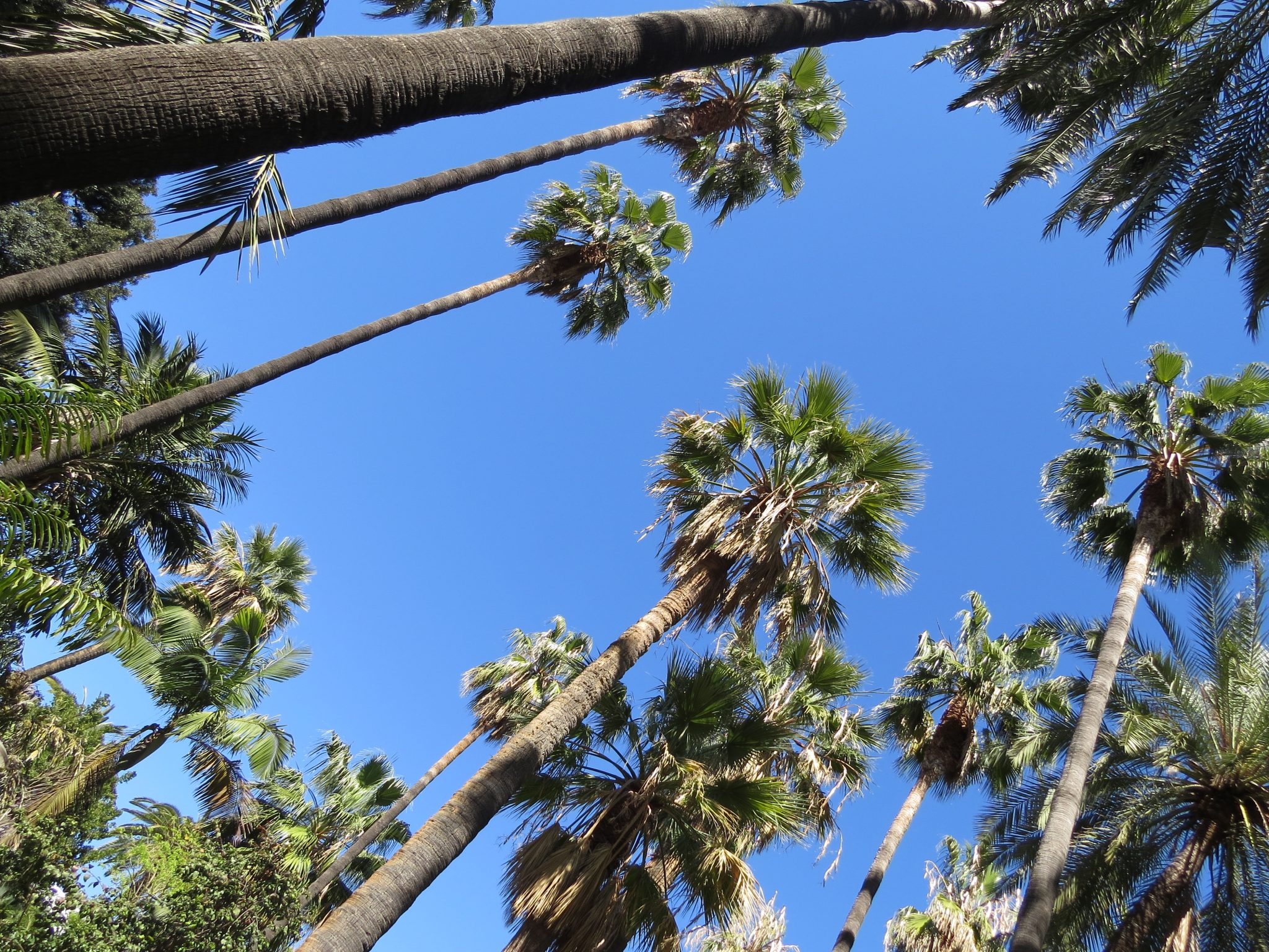 Relaxing under nature... soothing blue skies and tall trees