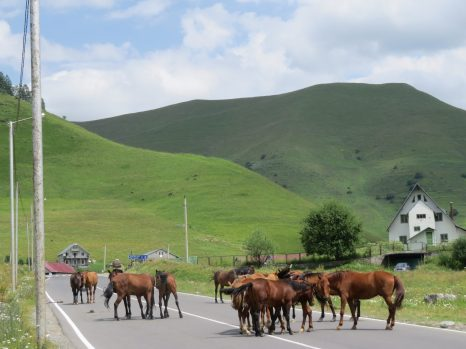 horses roaming freely when u r driving... true freedom... no rules no barriers .. connected with nature