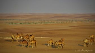 Best Desert staycation at Liwa in Abu dhabi, UAE