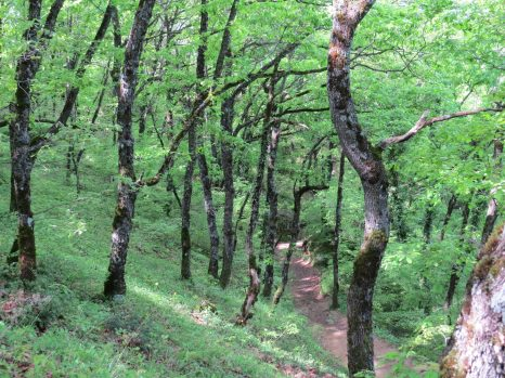 Natural Path