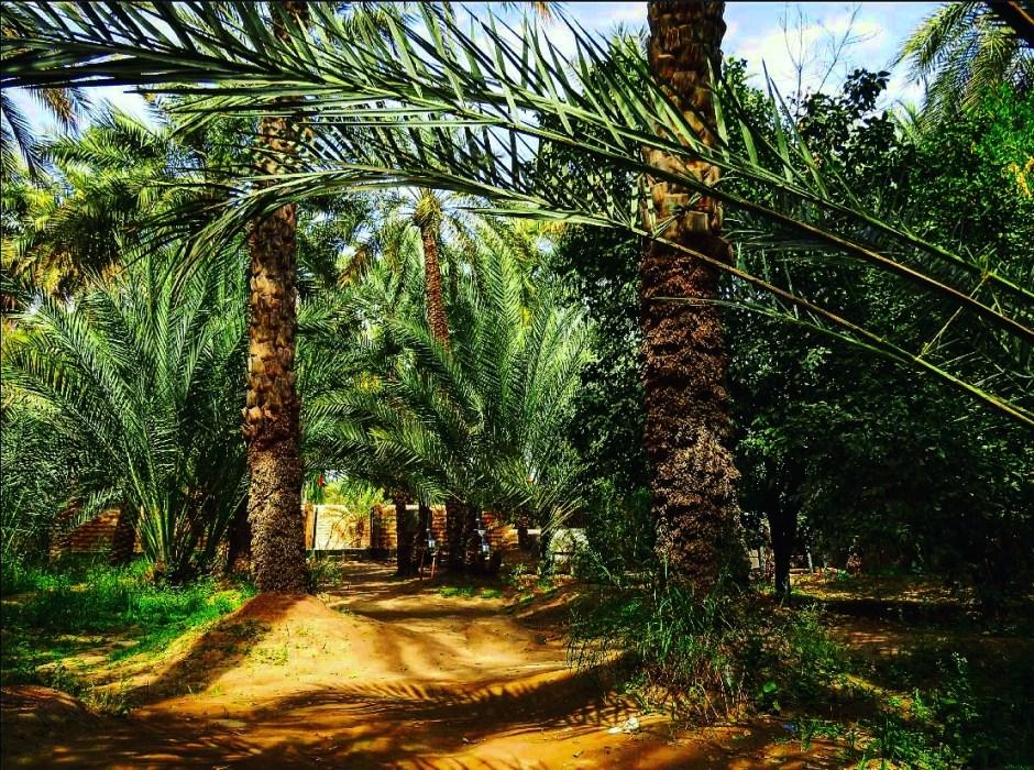 Explore Al-ain Attractions-