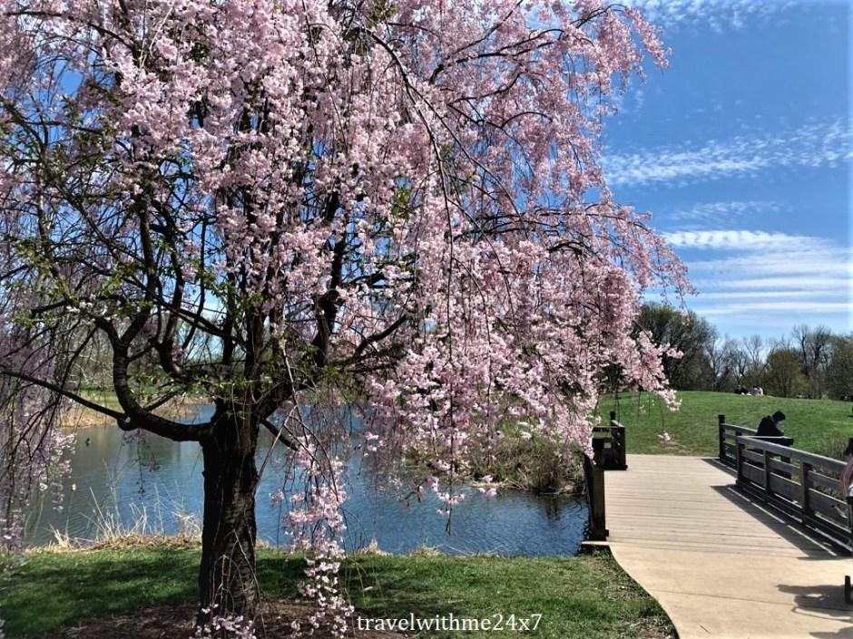 UIUC campus in spring
