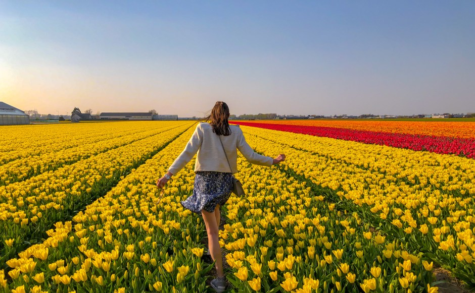 Beautiful Fields Of Flowers – Pictures Of Flowers Fields