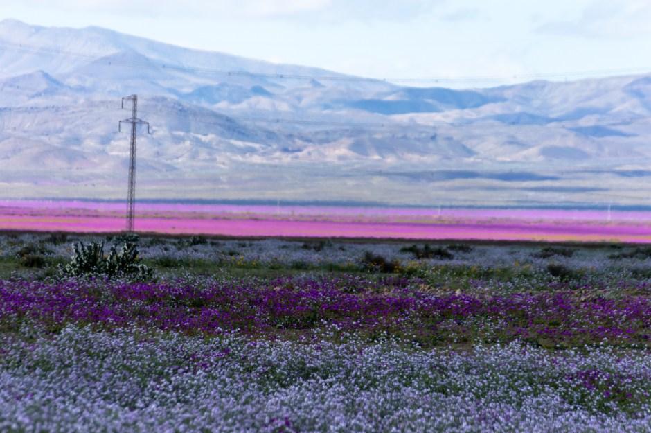 Beautiful Fields Of Flowers – Pictures Of Flowers Fields