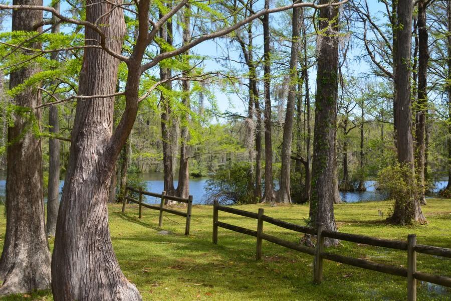Marais Wilmington 1 - Voyager en Caroline du Nord