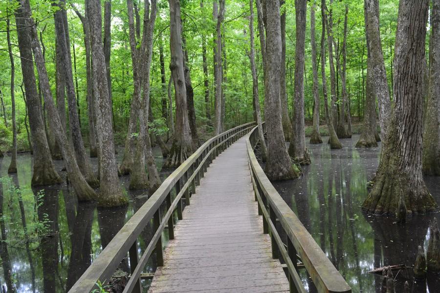 Au coeur du swamp - Mississippi