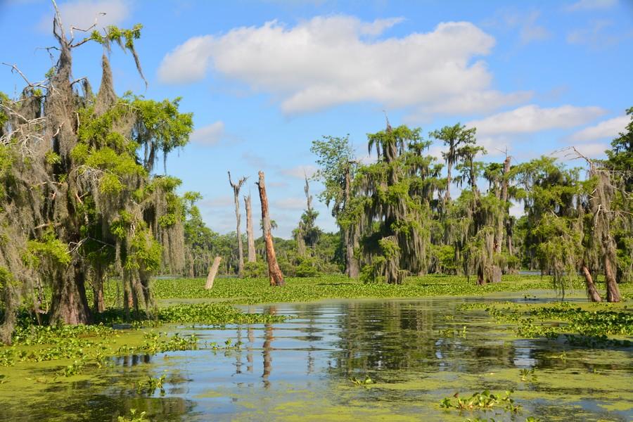 8 Lake Martin LeBlanc 50 - Voyager en Louisiane