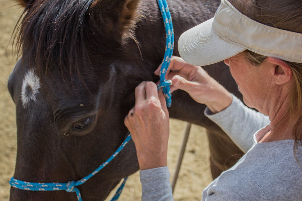Jody Horse - Prices ranch Colorado