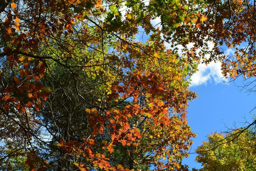 DSC 0141 1 - L'automne aux Etats-Unis