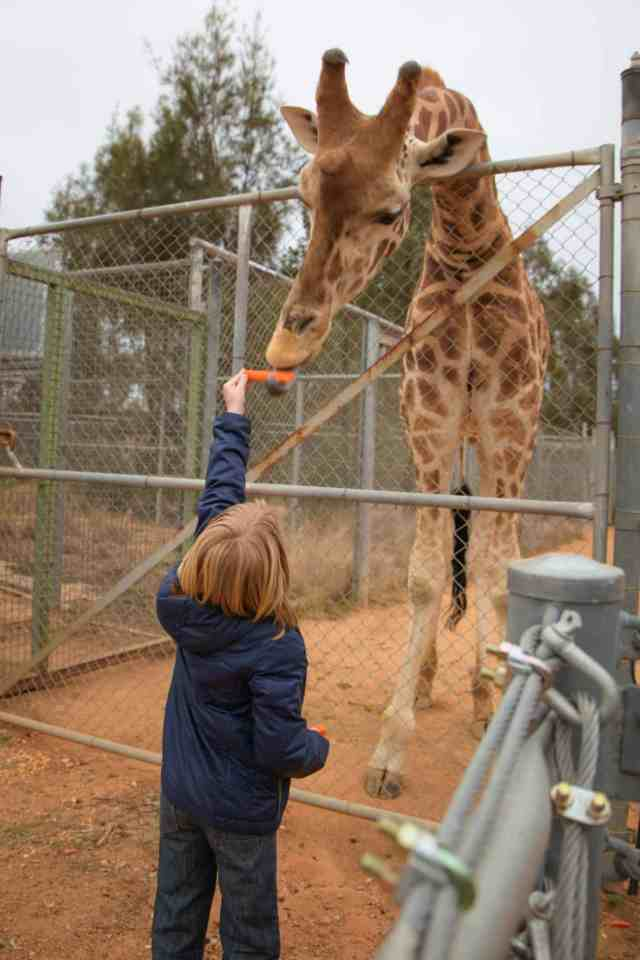 Travel With Meraki Taronga Western Plains Zoo
