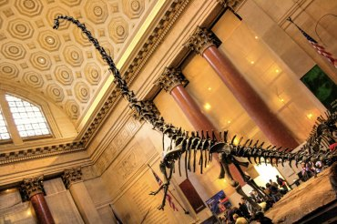 Exploring the American Museum of Natural History in New York City