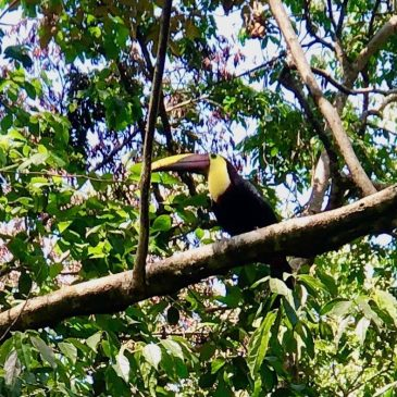 Should You Take Your Kids to Corcovado National Park in Costa Rica?