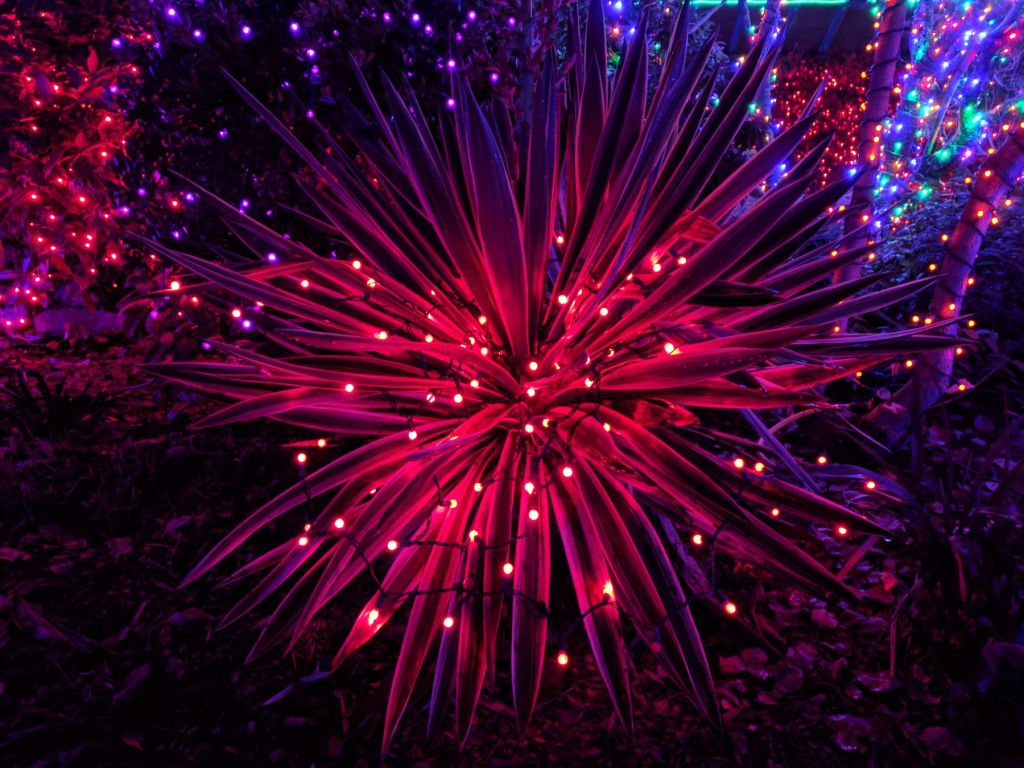 Zoolights Point Defiance Zoo and Aquarium